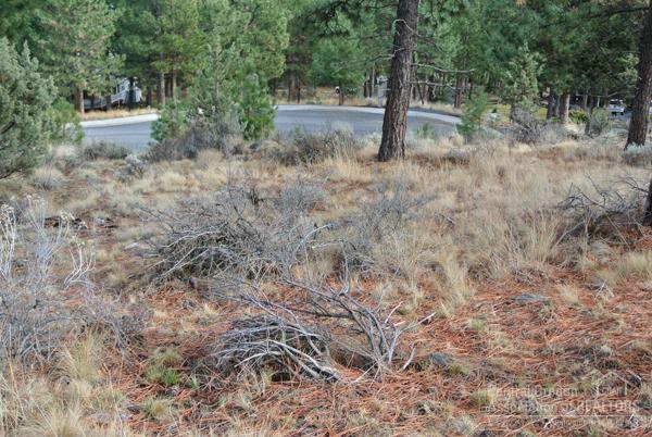 2772 NW Mccook Court, Bend, OR 97701 (MLS #201608393) :: Birtola Garmyn High Desert Realty