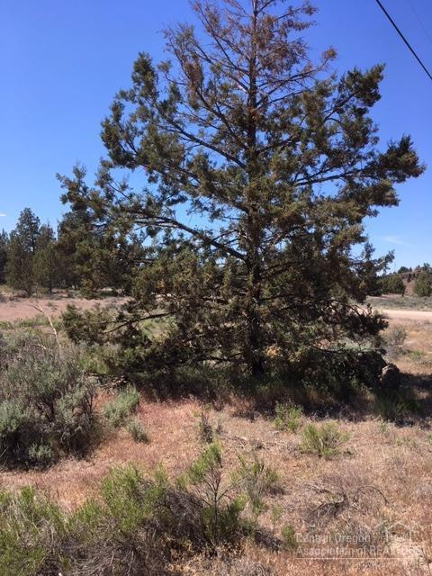0 SW Bullhead Road Tl100, Terrebonne, OR 97760 (MLS #201704944) :: Birtola Garmyn High Desert Realty