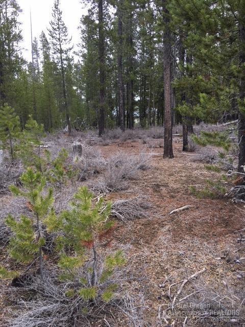 8 Bunny Butte Road, Crescent Lake, OR 97733 (MLS #201804179) :: Windermere Central Oregon Real Estate