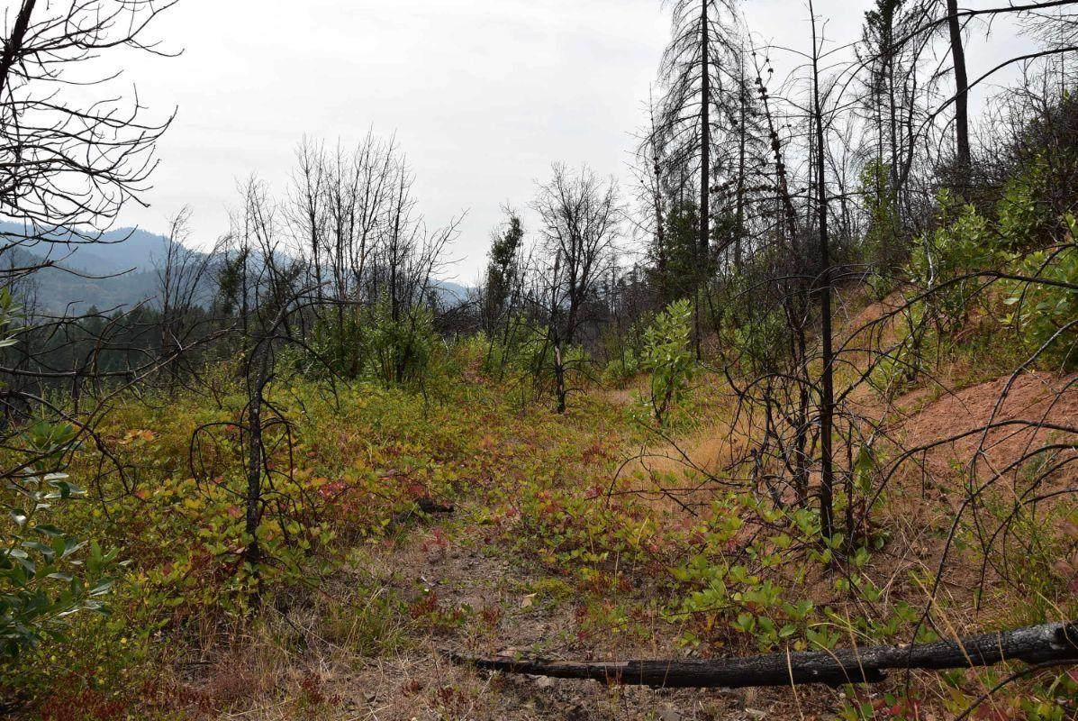 Elk Creek Highway - Photo 1