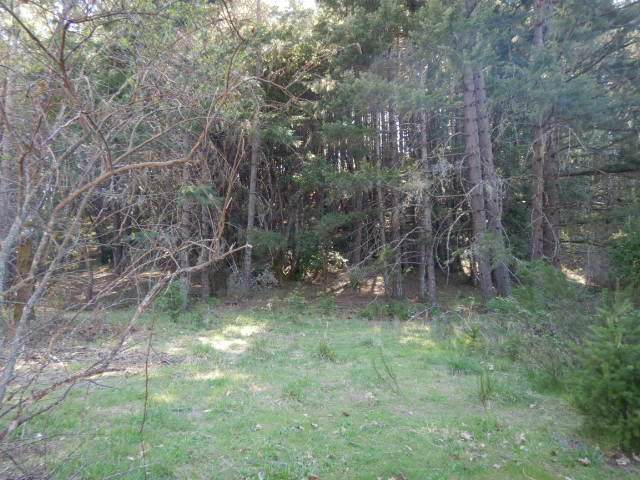 S Old Stage Road, Cave Junction, OR 97523 (MLS #220120795) :: Vianet Realty