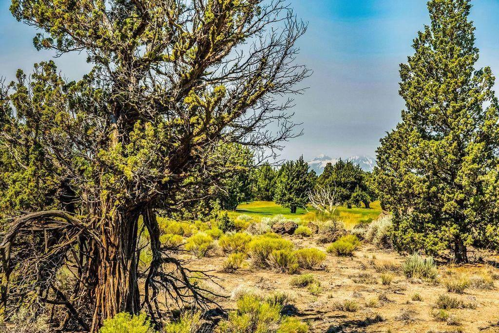 22914-Lot 215 Moss Rock Drive - Photo 1