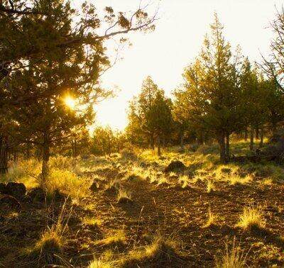 1605-Lot 91 NW Wild Rye Circle, Bend, OR 97703 (MLS #220128071) :: Arends Realty Group