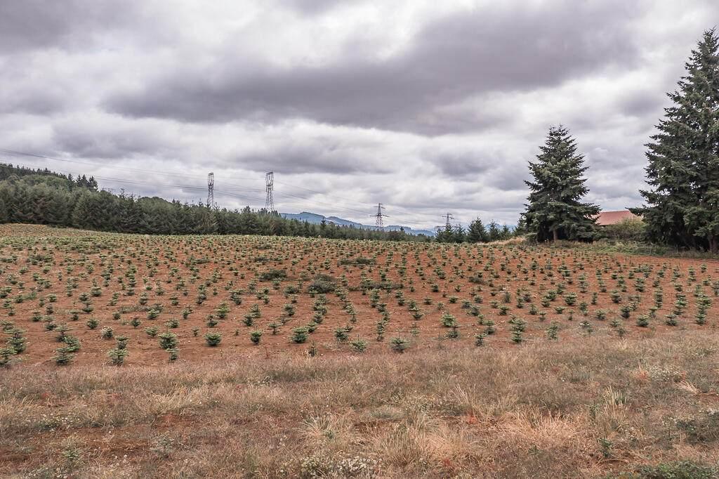 42820 Mt Pleasant Drive - Photo 1