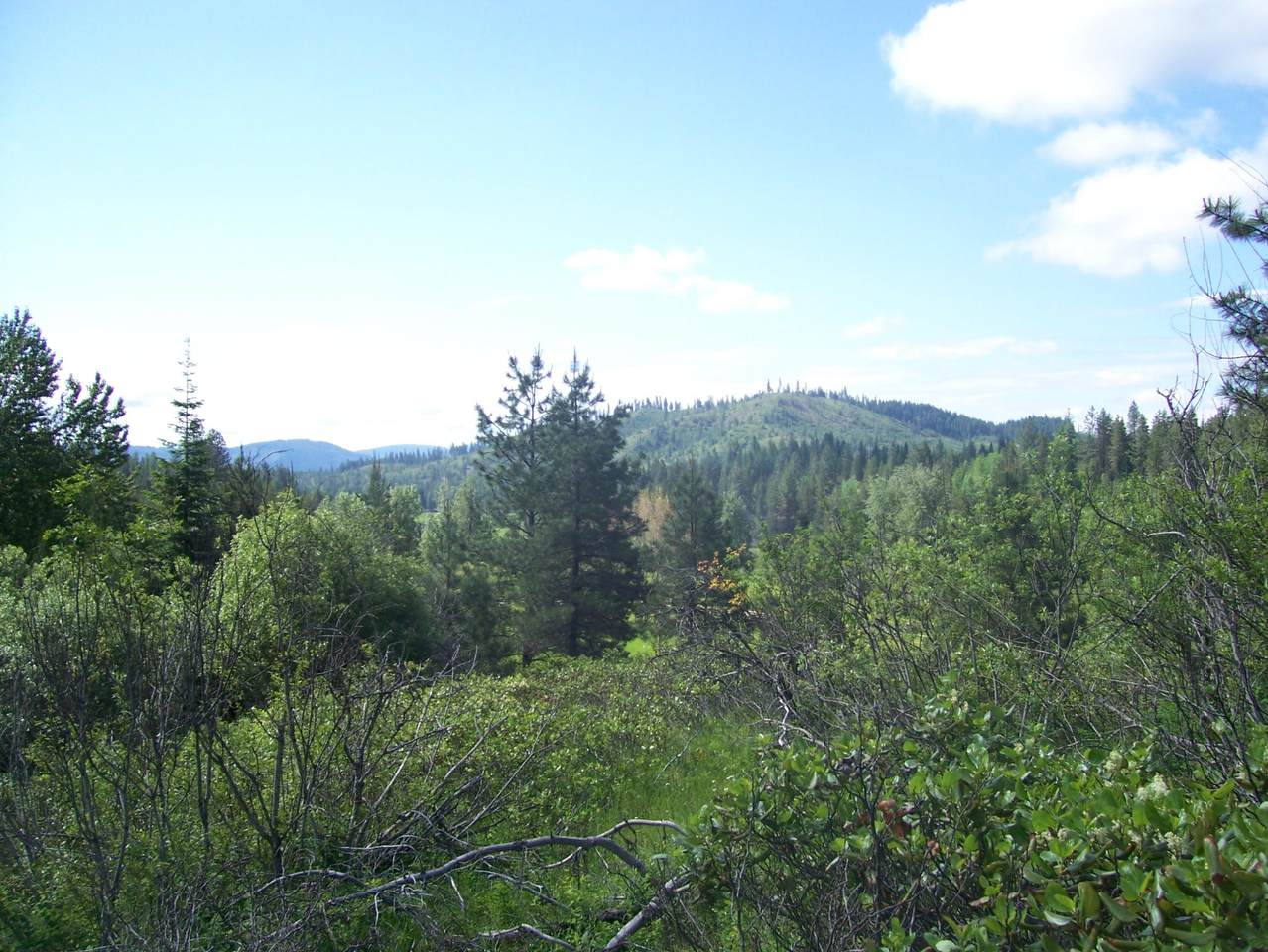 0000 Deer Valley Rd - Photo 1