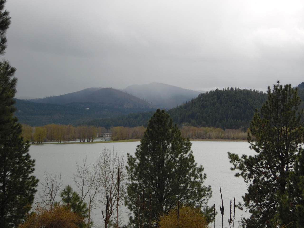 NKA Lake Shore Pines - Photo 1