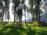 Shire Ln - Photo 1