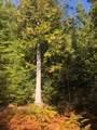 NKA Forestview Ln - Photo 10