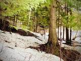 15433 Rustic Ridge Trl - Photo 54
