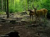 NKA Usfs 2649 Rd - Photo 2