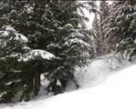 NKA Snowplow Road - Photo 1