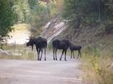 237 Mountain Ridge Dr - Photo 39