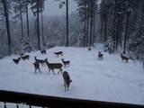 237 Mountain Ridge Dr - Photo 40