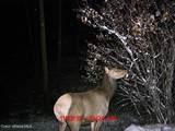 237 Mountain Ridge Dr - Photo 45