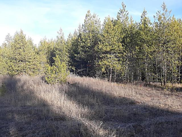 NKA Bearing Tree Lane Lot B, Spirit Lake, ID 83869 (#18-12651) :: Chad Salsbury Group