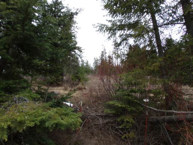 NNA Middle Fork Santa Crk, St. Maries, ID 83861 (#20-2193) :: Chad Salsbury Group