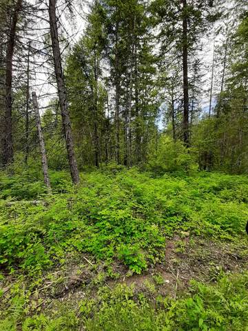 Cougar Loop, Clark Fork, ID 83811 (#20-5029) :: Keller Williams Realty Coeur d' Alene