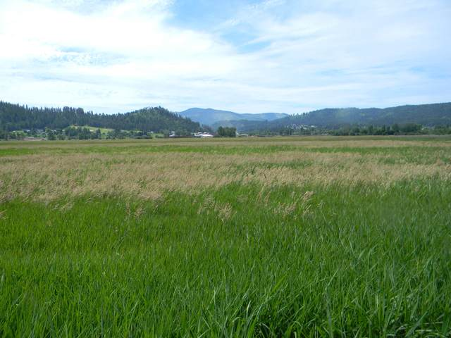 NKA 7.26 Acres Riverdale Dr., St. Maries, ID 83861 (#20-5904) :: Link Properties Group