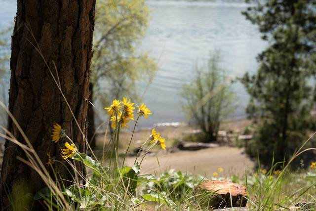 Lot 10 E Harlow Point Road, Harrison, ID 83833 (#21-4239) :: Team Brown Realty