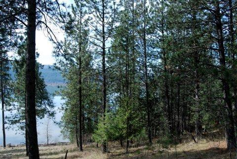 NKA Round Lake Pt, St. Maries, ID 83861 (#18-1229) :: Prime Real Estate Group