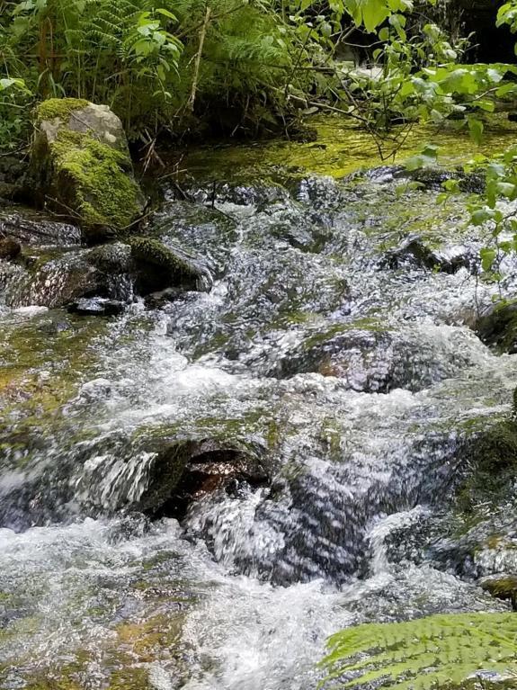 798 White Pine Way, Fernwood, ID 83830 (#18-8351) :: Team Brown Realty