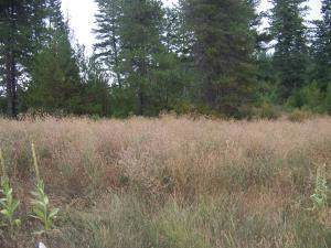 NNA 7th, Spirit Lake, ID 83869 (#19-11395) :: CDA Home Finder
