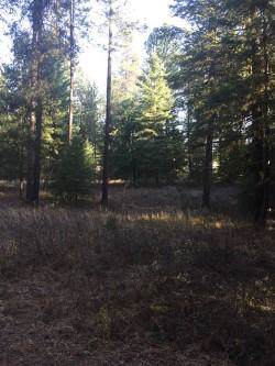NKA Blanchard Elk Rd, Blanchard, ID 83804 (#19-12331) :: Northwest Professional Real Estate