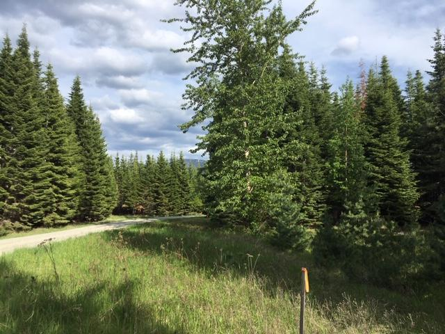 NNA Cougar Rd, Naples, ID 83847 (#19-5403) :: Link Properties Group