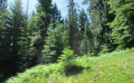 Lot245 Block 4 Gozzer Ranch Golf Lk, Harrison, ID 83833 (#19-7512) :: Groves Realty Group