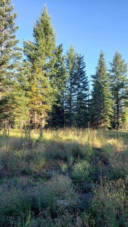 Lot 8 Tansy, Rathdrum, ID 83858 (#20-1697) :: ExSell Realty Group