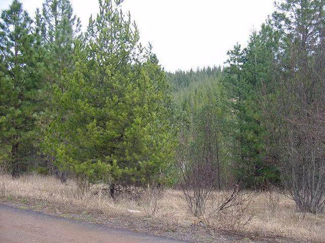 Rio Vista Lot 34, Blk 7, Osburn, ID 83849 (#20-2843) :: Flerchinger Realty Group - Keller Williams Realty Coeur d'Alene