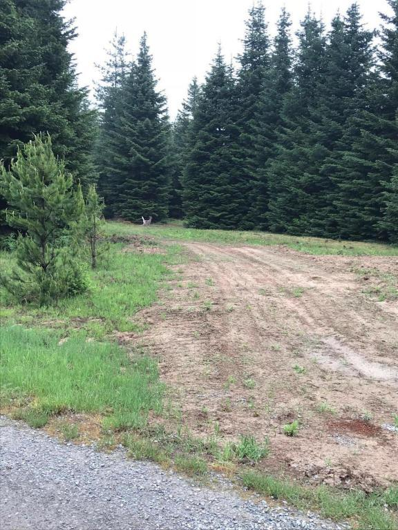 NNA Cougar Rd, Bonners Ferry, ID 83805 (#18-5613) :: Team Brown Realty