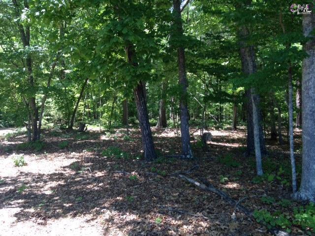 1316 Dreher ISLAND Road, Chapin, SC 29036 (MLS #392207) :: Home Advantage Realty, LLC