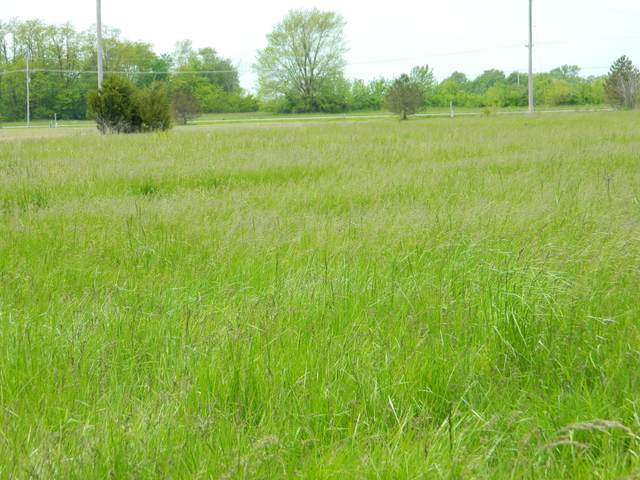 Address Not Published, Auxvasse, MO 65231 (MLS #392886) :: Columbia Real Estate