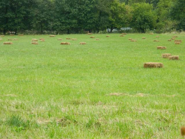 TBD Old Highway 54, Auxvasse, MO 65231 (MLS #390838) :: Columbia Real Estate