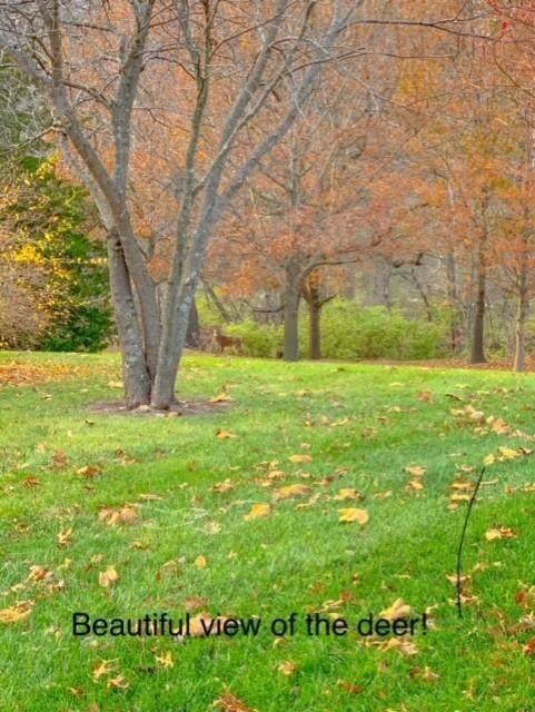 LOT 531 Pebble Creek, Columbia, MO 65201 (MLS #398610) :: Columbia Real Estate