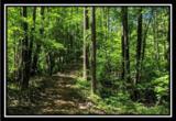 2177 Little Storms Creek Road - Photo 16