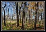 8672 Hayden Run Road - Photo 9