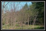 0 Mainsville Road - Photo 6