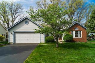 6070 Cheyenne Creek Drive, Lewis Center, OH 43035 (MLS #217012827) :: Core Ohio Realty Advisors
