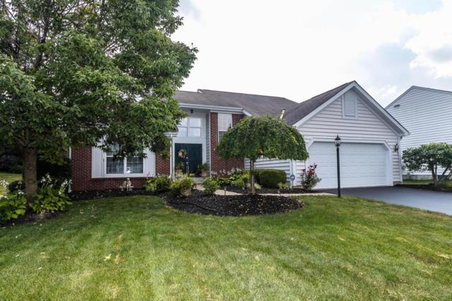 6563 Hermitage Drive, Westerville, OH 43082 (MLS #217030553) :: The Clark Realty Group @ ERA Real Solutions Realty