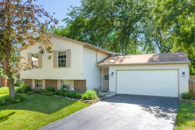 5300 Acevedo Court, Columbus, OH 43235 (MLS #218020375) :: Exp Realty