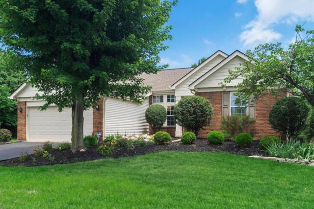 8681 Oak Creek Drive, Lewis Center, OH 43035 (MLS #218022458) :: Exp Realty