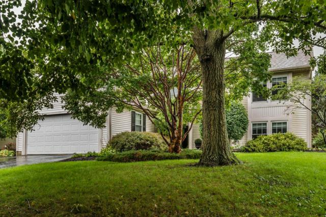 3906 Saddlehorn Drive, Columbus, OH 43221 (MLS #218033926) :: The Mike Laemmle Team Realty