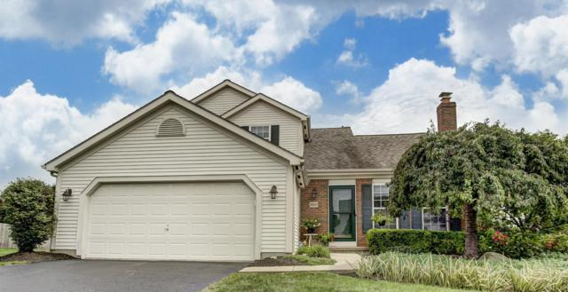 8810 Sedona Drive, Lewis Center, OH 43035 (MLS #218034887) :: RE/MAX ONE