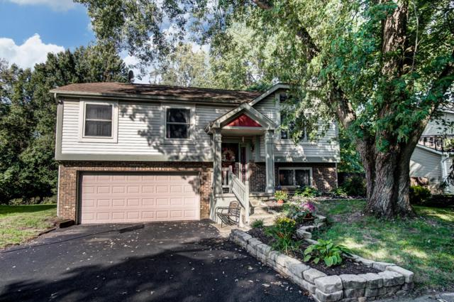 3736 Dolomite Drive, Columbus, OH 43230 (MLS #218038093) :: RE/MAX ONE