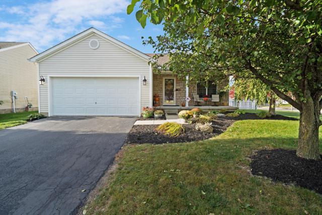 401 Cobblestone Drive, Delaware, OH 43015 (MLS #218039746) :: Exp Realty