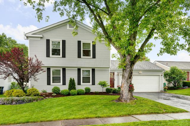 3744 Timberland Drive, Columbus, OH 43230 (MLS #219016788) :: The Clark Group @ ERA Real Solutions Realty