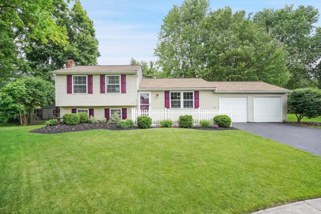 6510 Bunting Court, Westerville, OH 43081 (MLS #219018641) :: Signature Real Estate