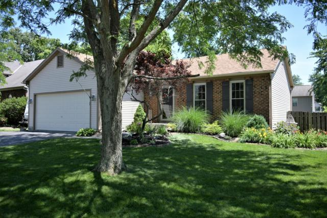 1625 Saffron Drive, Marysville, OH 43040 (MLS #219023647) :: The Raines Group
